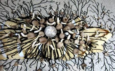 'Mushroom Death Suit'